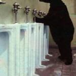 ca05_bear_urinal